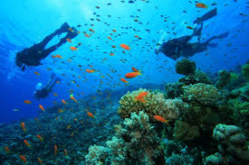 snorkeling images Diving and snorkeling in colombia jpg