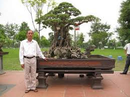 the most expensive bonsai trees luxurytrees bonsai