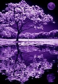 100 anos de fotografia infravermelho purple moonlight and