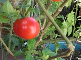 gardening thekalechronicles