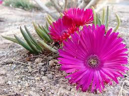 flowers las vegas flowers thesedaysround s