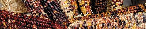ornamental corn products rupp seeds