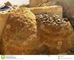 thar desert animals drying animal dung near traditional house in a small village th