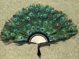 extra large feather fans large peacock feather fan 20 by 36 inches made to order