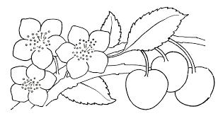 rose flower drawing step step drawing sketch
