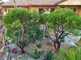 Native Plant Nursery Los Angeles Ca Landscaping With Native Plants Can Help Save Water During