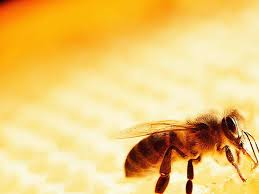 images about bee background 8986