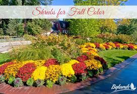 shrubs fall color bylands nurseries