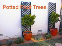triyae com u003d good fruit trees for backyard various design