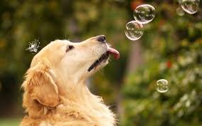 dog wallpapers wallpapers 12 download for free