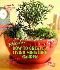 indoor and outdoor container ideas for miniature gardening the
