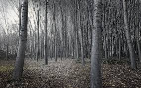 black and white tree forest wallpapers 1920x1200 1252340
