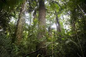 earth has 3 trillion trees but they u0027re falling at alarming rate