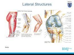 Knee Anatomy Pics Anatomy Of Knee