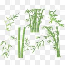 bamboo sketch png vectors psd and icons for free download pngtree
