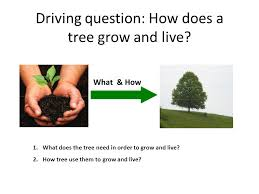 driving question how does a tree grow and live what how 1 what