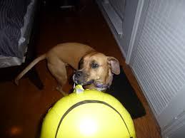 boxer dog 2015 diary the mayhem diaries life through the eyes of an adventurous pup