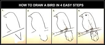 coloring pages glamorous steps to draw a bird 007 coloring pages