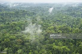 canopy amazon rainforest canopy yasuni national park amazon ecuador stock photo