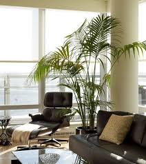Lounge Chairs For Living Room Eames Lounge Chair Replica Living Room Midcentury With Bookcase