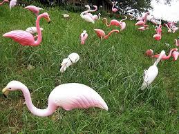 the plastic pink flamingo