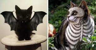 Bat Costumes Halloween 10 Terrifyingly Pawsome Halloween Cat Costumes Bored Panda
