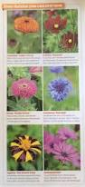 Lucca Steel Leaf Gazebo Cover by 88 Best Garden Ideas Images On Pinterest Landscaping Garden