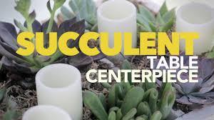 diy succulent centerpiece youtube