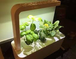 5 best budget indoor hydroponics kits for growing your home herb