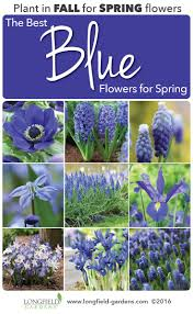 22 best beautiful blue flowers images on pinterest blue flowers