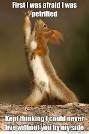Dramatic Squirrel Meme - dramatic squirrel weknowmemes