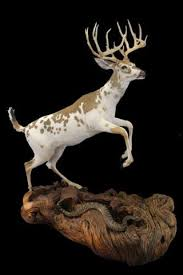 Deer Pedestal Juniper Taxidermy Pedestals U0026 Display Stands U2013 Rocky Mountain Twist