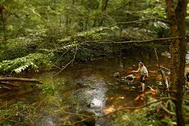 Washington forest images George washington and jefferson national forests trout unlimited jpg
