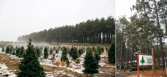 new traditions hansen christmas tree farm u2014 kate becker photography