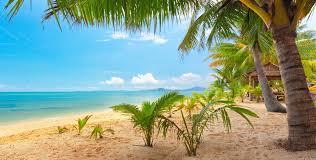 Palm Tree Wallpaper Sand Sea Sky Palm Trees Nature Tropical Landscape Beautiful