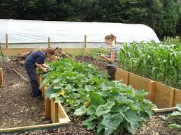 raised vegetable garden beds u2013 exhort me