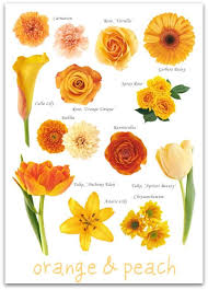 wedding flowers names the 25 best orange flower names ideas on orange