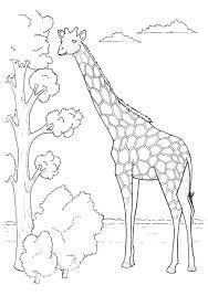 imagenes de jirafas bebes animadas para colorear paginas para colorear jirafa giraffe coloring picture para para