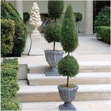 topiary trees topiaries you ll wayfair