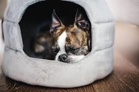 Igloo Dog Bed Best Friends By Sheri 2 In 1 Honeycomb Hut Cuddler Bella Dog Bed