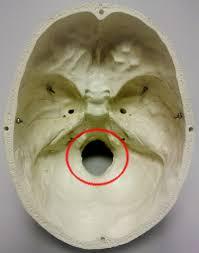 Base Of The Skull Anatomy Skull Base Anatomy