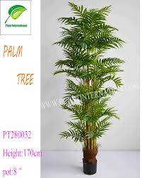 indoor palm indoor palm trees sale indoor palm trees sale suppliers and