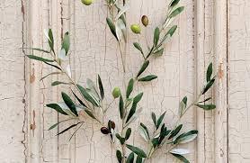 branch olive tree branch olive plants