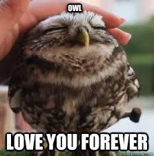 Cute I Love You Meme - owl love you forever cute owl quickmeme