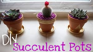 diy succulent plants and cactus plants with painted pots youtube