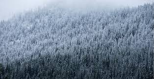 the cascades are getting a of snowfall prompting