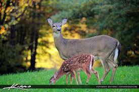 North Carolina wildlife images Amazing pictures of north carolina wildlife jpg