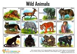 wild animals images Kids science projects wild animals free download jpg