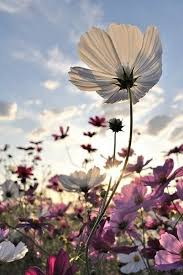 Spring Flower Pictures Best 10 Flower Pictures Ideas On Pinterest Flowers Pretty