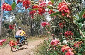 australia u0027s top 50 bike riding experiences rideon